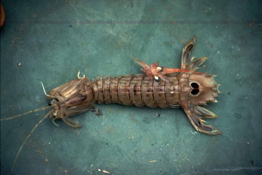 11. חיות ים