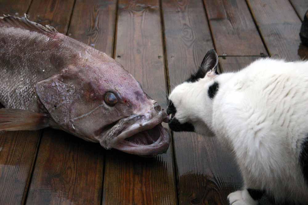 הדג הגדול מהחלומות - סיפור יפואי